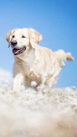 Labrador, dog, field, cute animals, funny (vertical)
