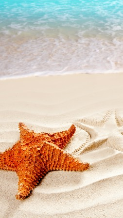 Sea, 5k, 4k wallpaper, ocean, starfish, shore, Best Beaches in the World (vertical)