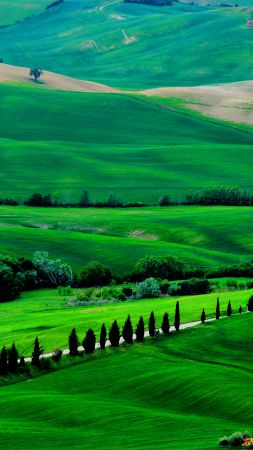 Tuscany, 4k, HD wallpaper, Italy, Meadows, hills, pines, trees (vertical)