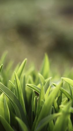 Green grass, 5k, 4k wallpaper, macro (vertical)