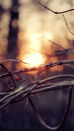 Forest, 4k, HD wallpaper, branch, sun