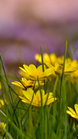 Flowers, 4k, HD wallpaper, green grass, nature (vertical)