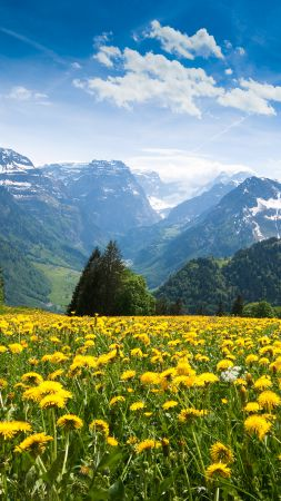 Alps, 4k, HD wallpaper, France, mountains, dandelion, meadows, sky (vertical)