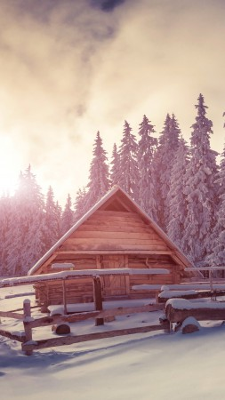 Pines, snow, sunset, house
