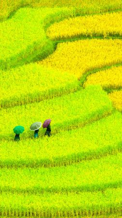 Asia, 4k, HD wallpaper, Field, meadows, yellow, women (vertical)