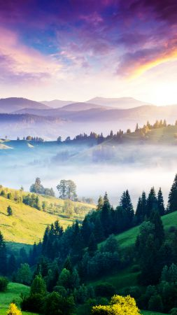 Carpathians, pines, hills, sunset, fog