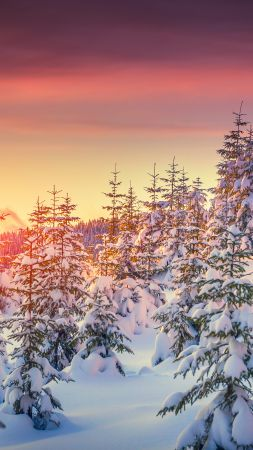 Pines, 5k, 4k wallpaper, 8k, snow, sunset, winter (vertical)