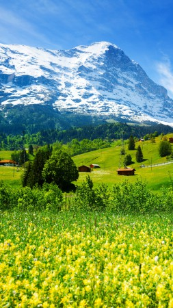 Switzerland, 5k, 4k wallpaper, mountains, meadows, wildflowers (vertical)