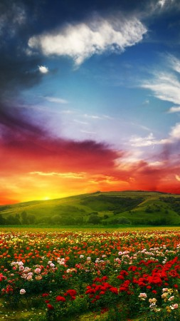 India, 5k, 4k wallpaper, Valley of Flowers, Meadows, roses, sunset, clouds (vertical)