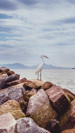 Heron, 5k, 4k wallpaper, sea, rocks, sky (vertical)