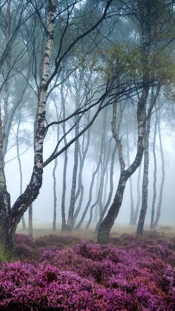 Stanton Moor, Peak District, UK, Forest, wildflowers, fog