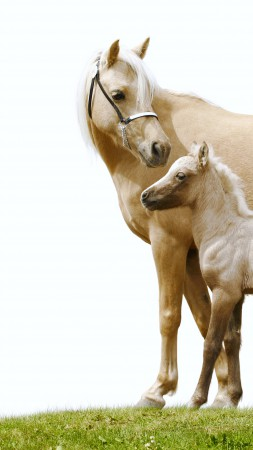 Horse, white, cute animals (vertical)