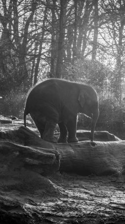 Elephant, forest, sunlight (vertical)