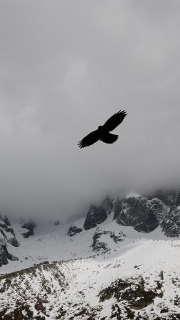 Eagle, mountains, flight, clouds (vertical)