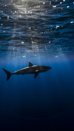 Shark, Atlantic ocean, underwater, Best Diving Sites (vertical)