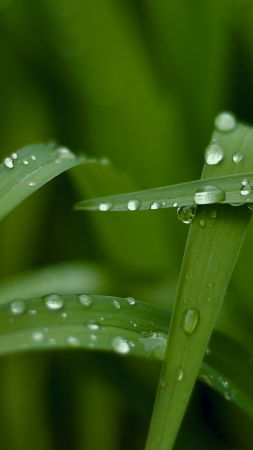 Grass, macro, drops, green