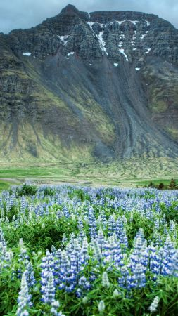 Valley of Flowers, 5k, 4k wallpaper, Himalayas, Mountains, meadows, wildflowers (vertical)