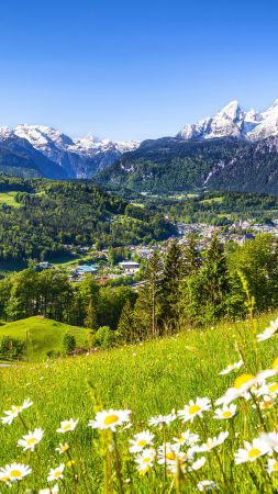 Alps, 5k, 4k wallpaper, Germany, Meadows, mountains, grass, daisies (vertical)