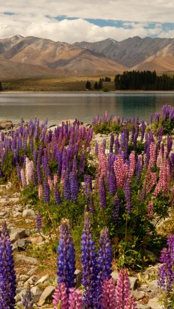lavander, 5k, 4k wallpaper, Lake Tekapo, South Island, New Zealand, booking, rest, travel, mountains, sky, clouds, vacation (vertical)
