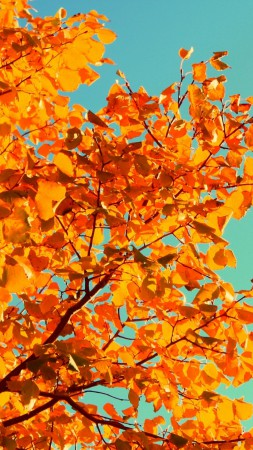 Tree, 5k, 4k wallpaper, sky, autumn, yellow, leaves (vertical)