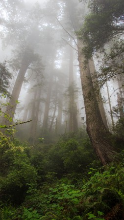fog, forest, green, plants