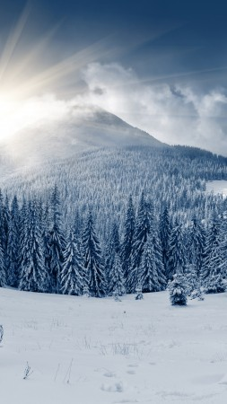 winter forest, 5k, 4k wallpaper, mountain, sun, snow, fir-trees (vertical)