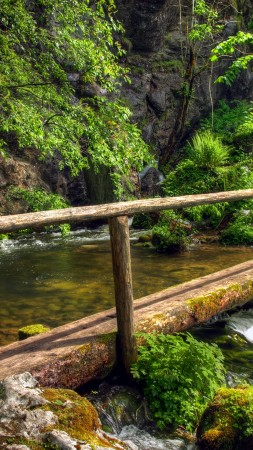 forest, green, trees, plants, waterfall, bridge