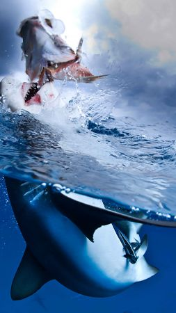 Caribbean Reef, Shark, diving, tourism, travel, split shot (vertical)