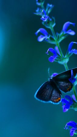 Butterfly, flowers, blue (vertical)