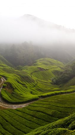 Cameron Highlands, 5k, 4k wallpaper, Malaysia, meadows, fog, sky (vertical)