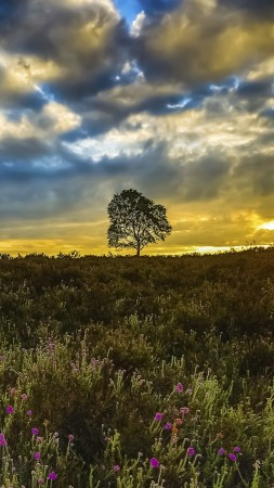 Meadows, wildflowers, sunset, trees, clouds