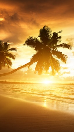 beach, 5k, 4k wallpaper, ocean, sunset, palm trees, vacation, journey (vertical)
