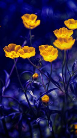 Buttercups, 4k, 5k wallpaper, flowers, yellow, purple (vertical)