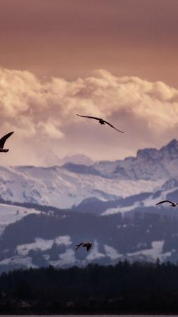 Switzerland, 5k, 4k wallpaper, 8k, Alps, mountains, seagulls, clouds (vertical)