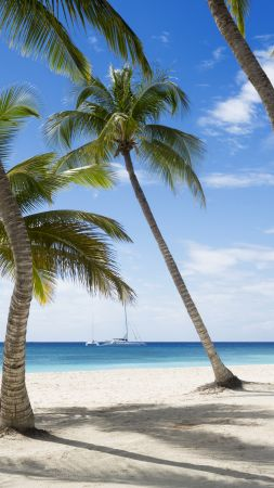Jamaika, 5k, 4k wallpaper, The Caribbean, beach, palms, sky, travel, tourism (vertical)