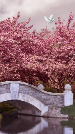 Japan, 5k, 4k wallpaper, blossom, cherry, bridge, river, dove (vertical)