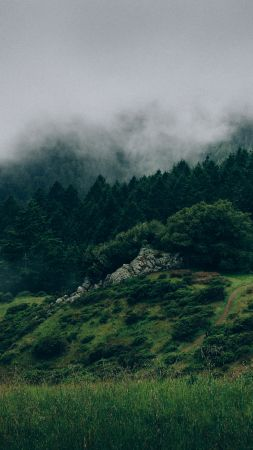 Forest, 5k, 4k wallpaper, 8k, mist, hills, fog