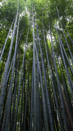 4k 5k Wallpaper 8k Trees Green Bamboo Vertical