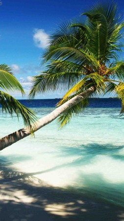 Maldives, holidays, palms, paradise, vacation, travel, hotel, island, ocean, bungalow, beach, sky