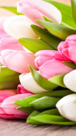 Valentine's Day, flowers, tulips, hearts, love (vertical)