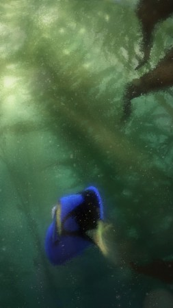Finding Dory, nemo, fish, Pixar, animation (vertical)