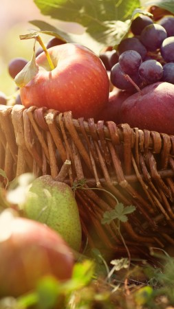 basket, grapes, apples, pears, greens, sun (vertical)