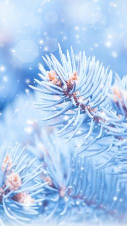 Fir-tree, 5k, 4k wallpaper, Christmas, winter, blue (vertical)
