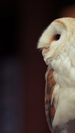 Owl, cute animals (vertical)