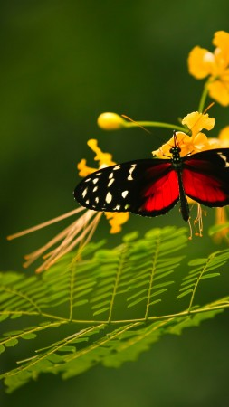 Beautiful Butterfly, red wings, green background, wild nature, yellow flowers, insects