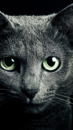 Kitty, kitten, cat, eyes, cute, black (vertical)