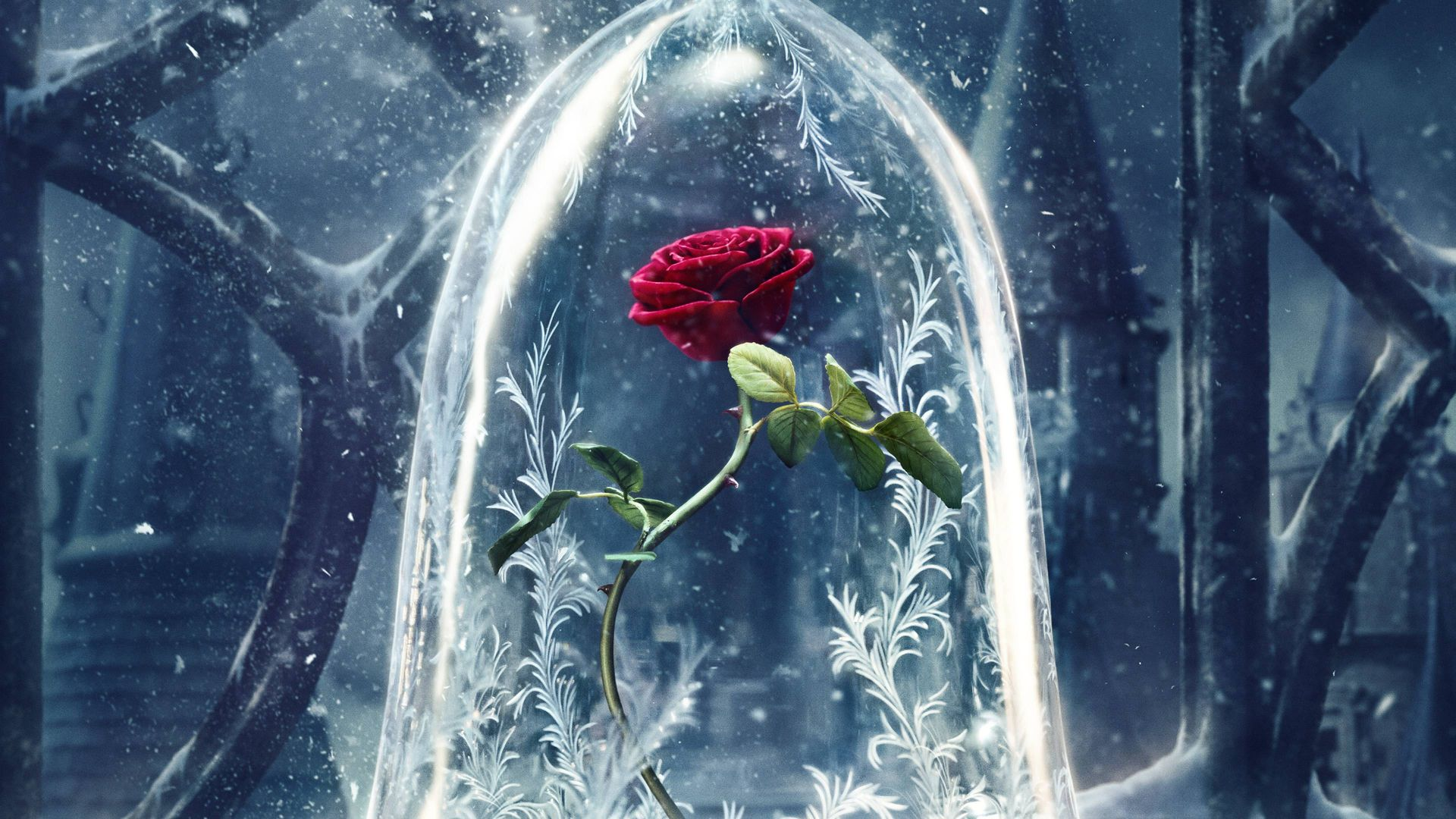 Beauty and the Beast, rose, red, best movies (horizontal)