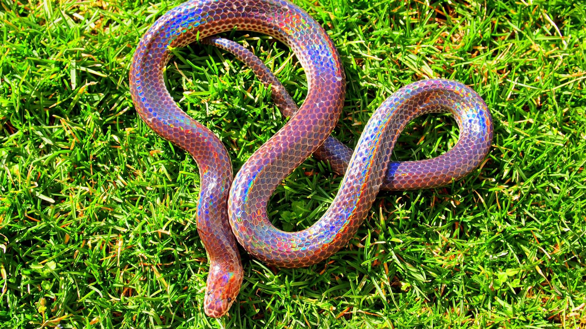 Pets At Home Snake Food