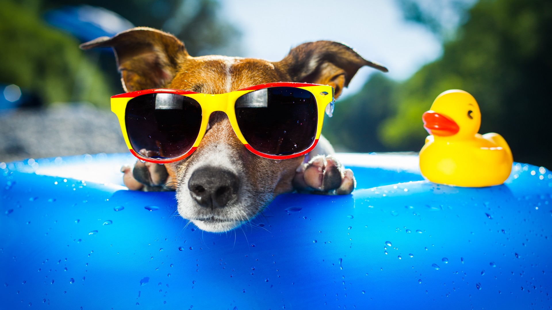 Dog, puppy, duck, glasses, drops, summer, resort, funny, beach, blue (horizontal)