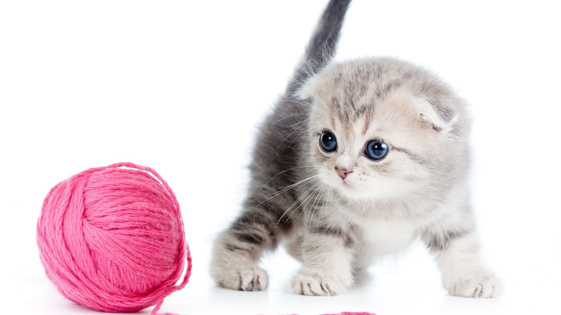 kitten, cat, cute, 4k (horizontal)
